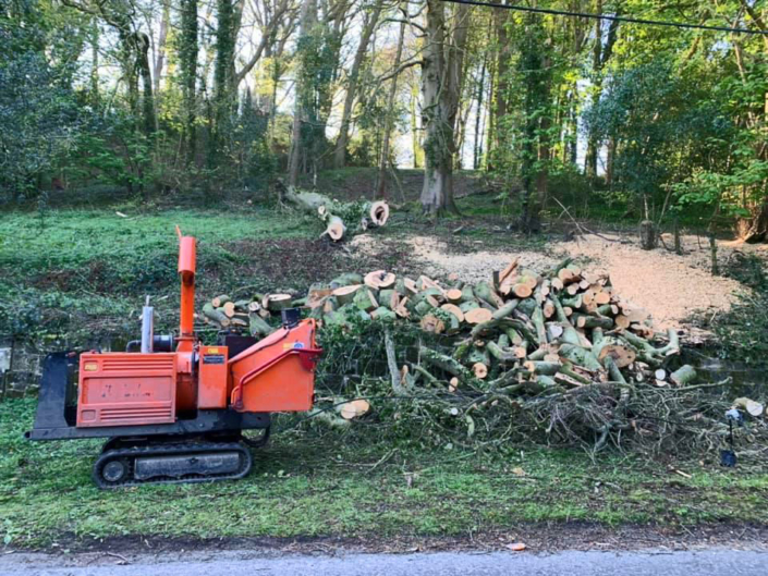 Vale Tree Surgeons - Gallery 05
