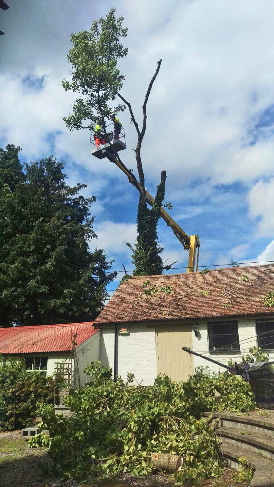 Vale Tree Surgeons - Gallery 08