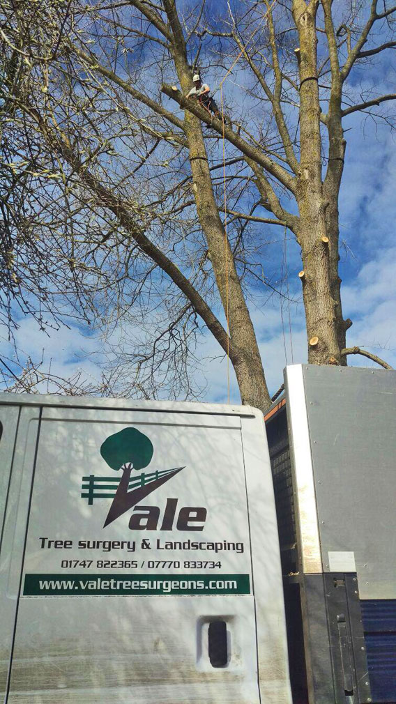 Vale Tree Surgeons - Gallery 15