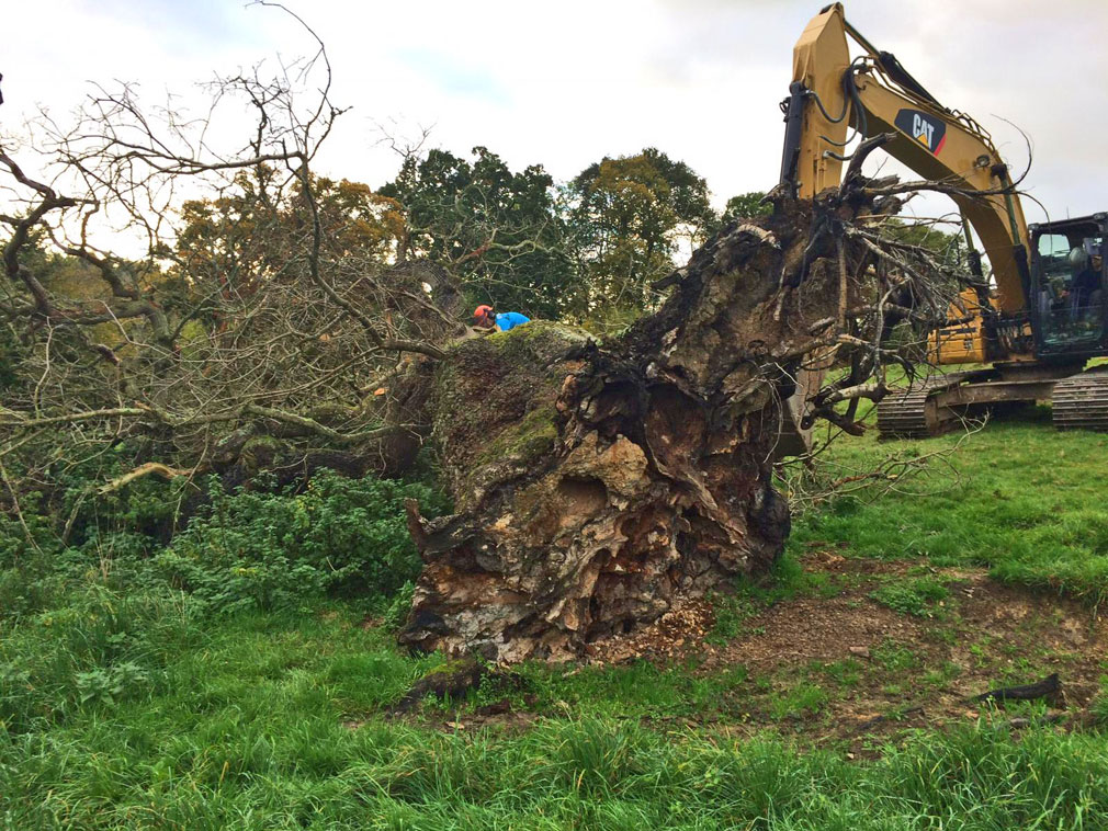 Vale Tree Surgeons - Gallery 18
