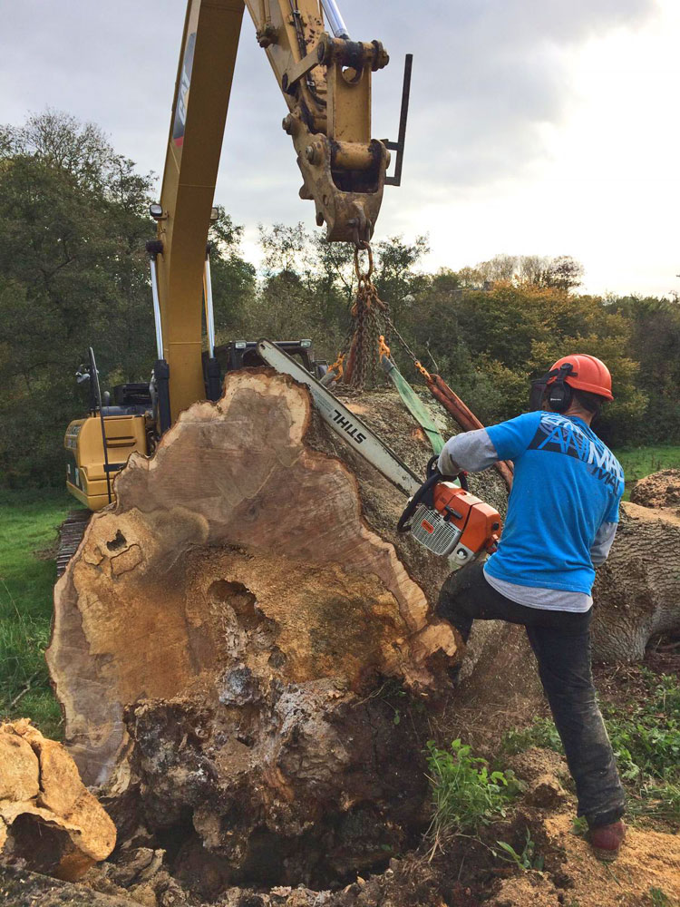 Vale Tree Surgeons - Gallery 19