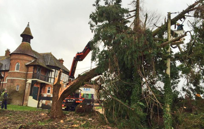 Vale Tree Surgeons - Gallery 26