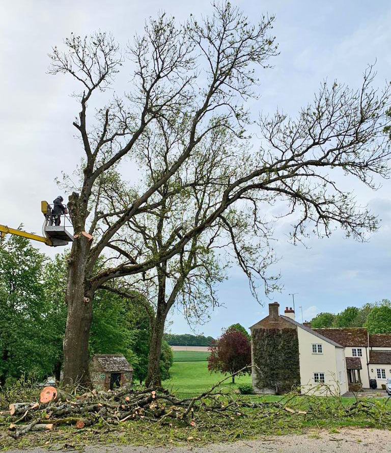 Vale Tree Surgeons - Gallery 30
