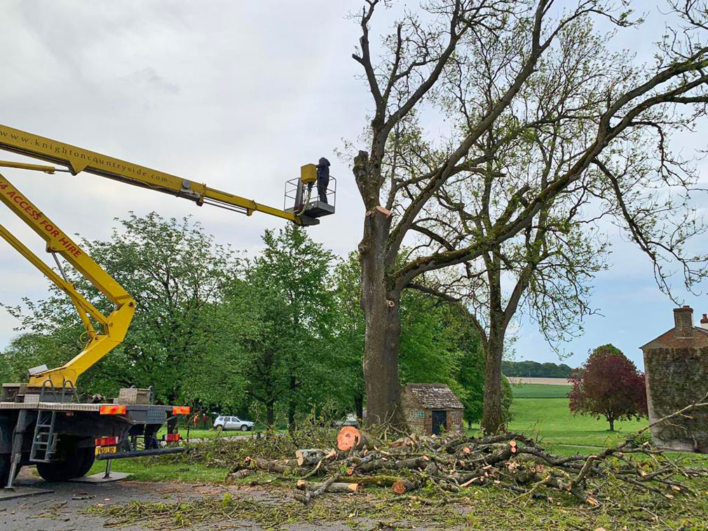 Vale Tree Surgeons - Gallery 34