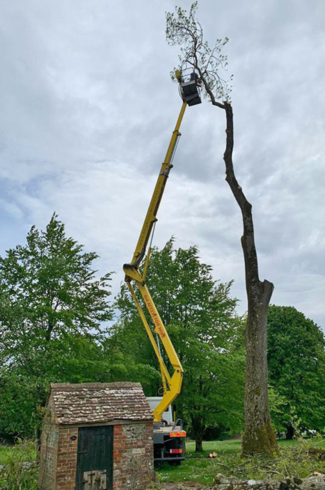 Vale Tree Surgeons - Gallery 35