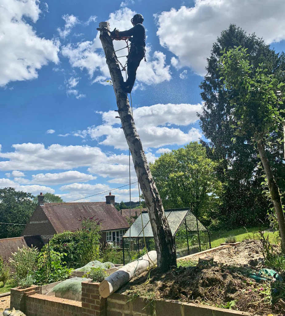 Vale Tree Surgeons - Gallery 38