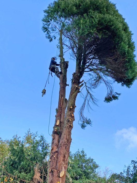 Vale Tree Surgeons - Gallery 39