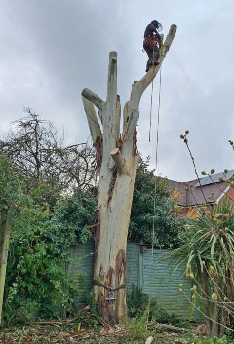 Vale Tree Surgeons - Gallery 40